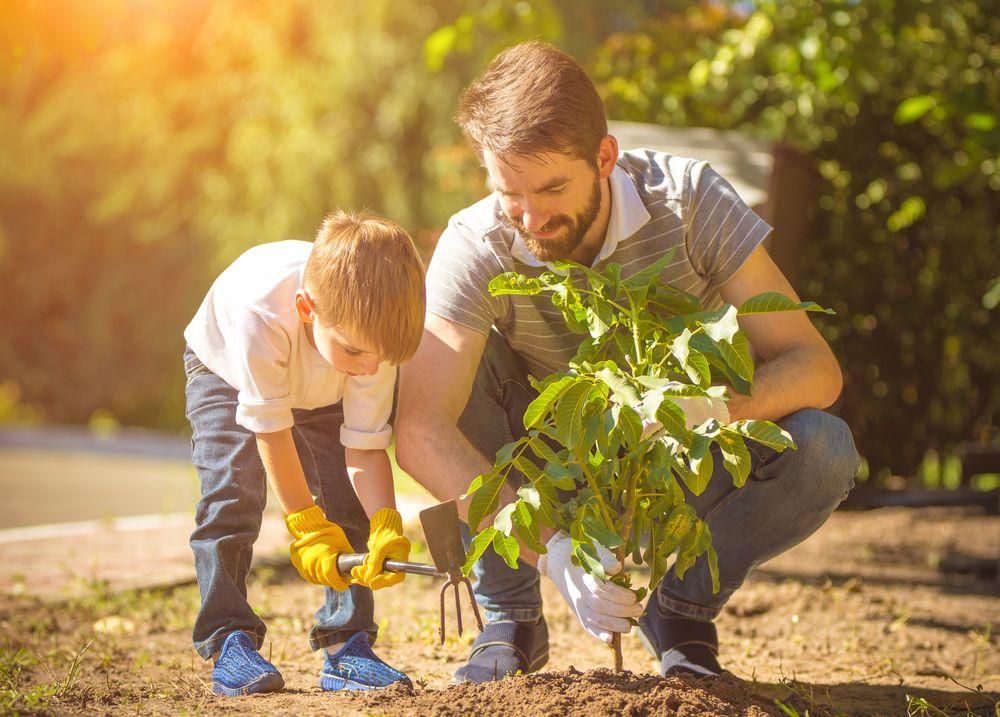 ¿Cómo elegir materiales para sembrar?