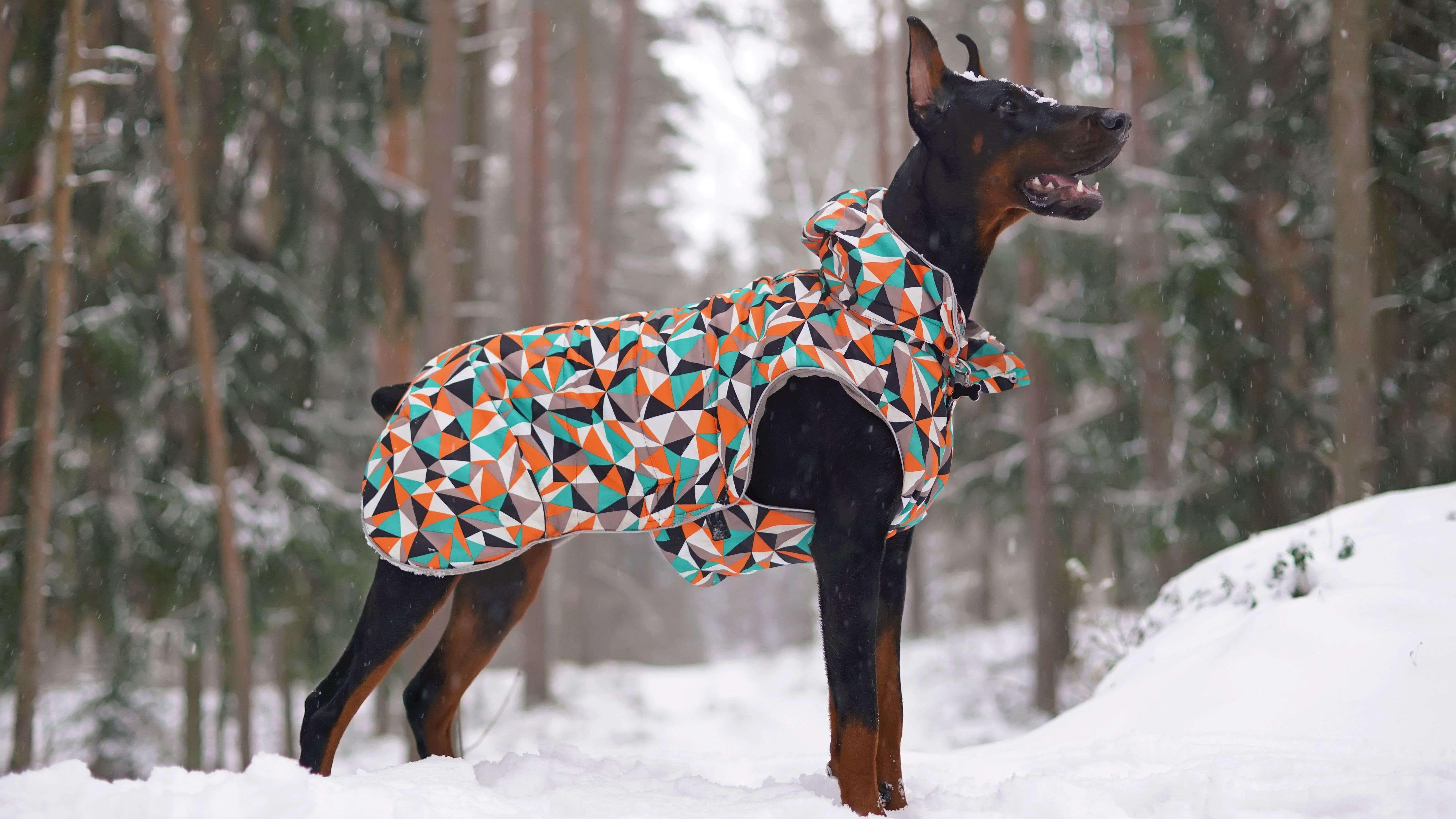 Comment choisir des vêtements pour chien ?