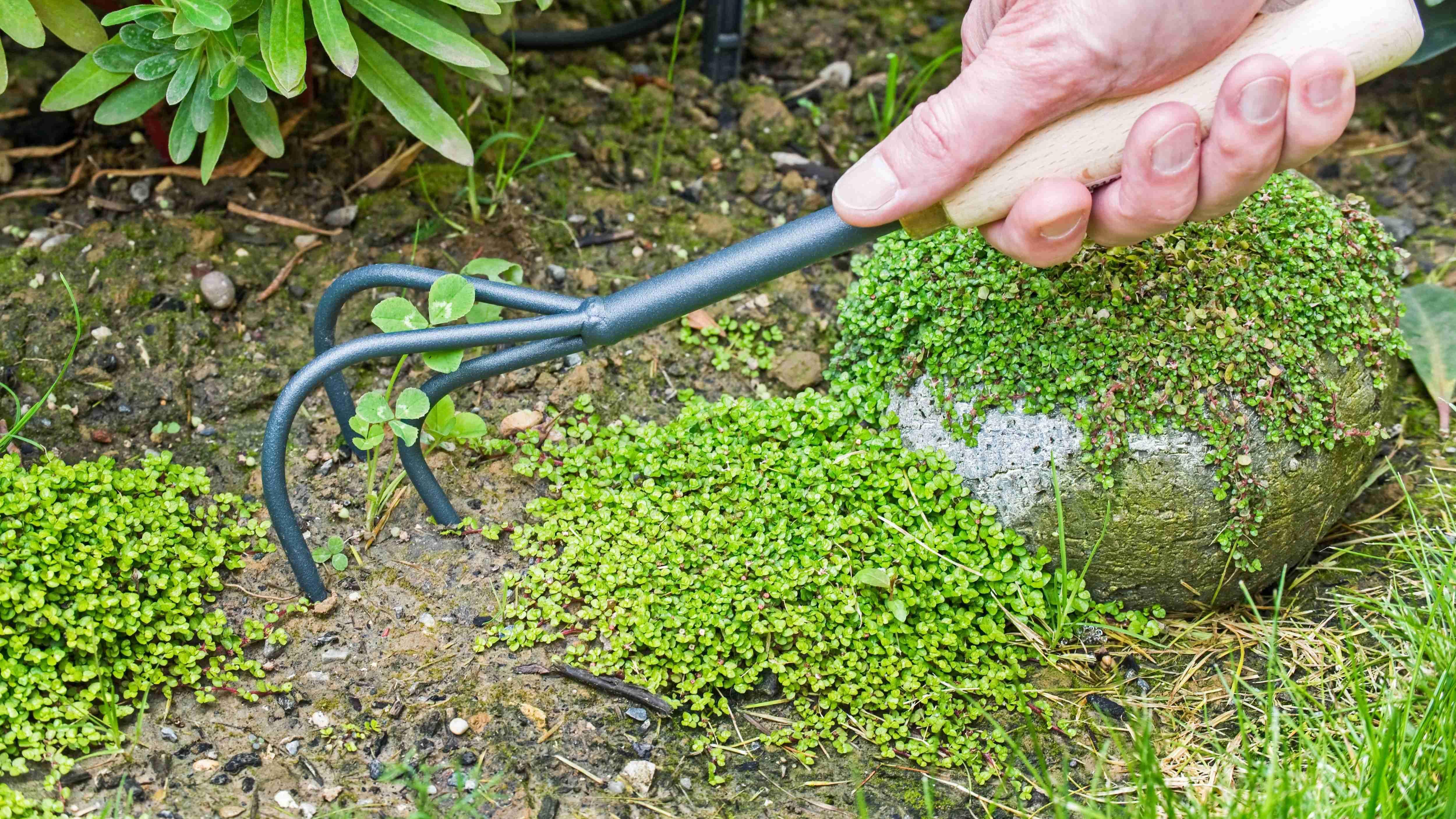 Comment choisir ses outils pour ameublir le sol