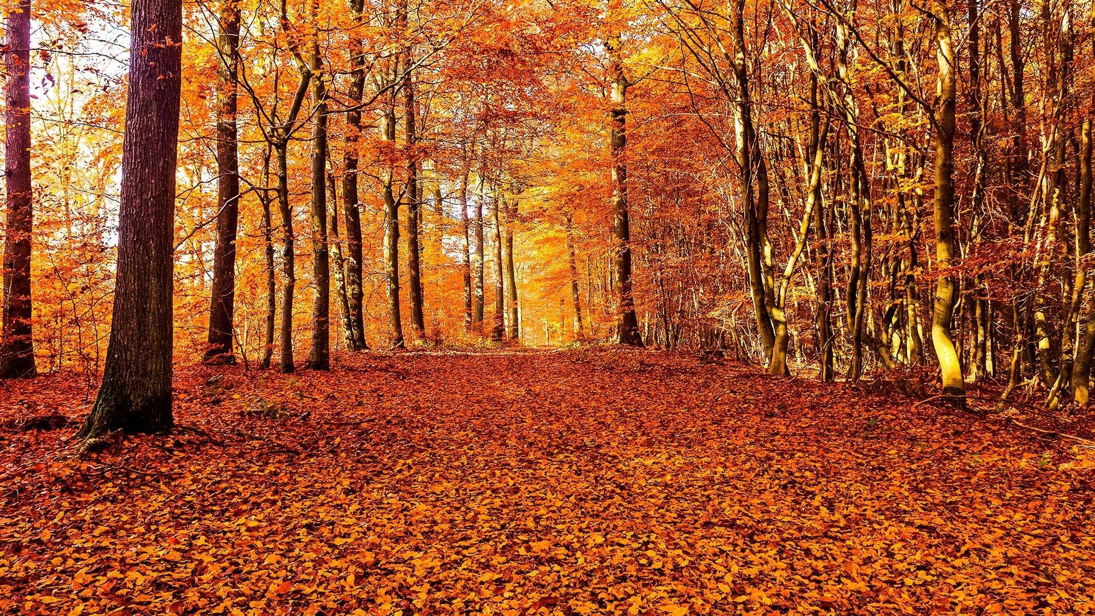 """""""Le vent de novembre arrache la dernière feuille."""""""