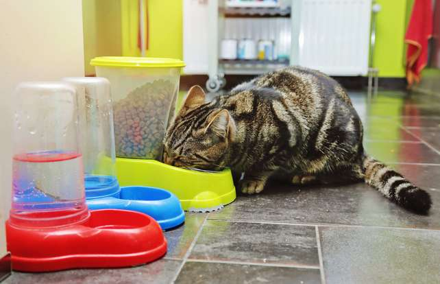 Cat bowl and automatic feeder buying guide