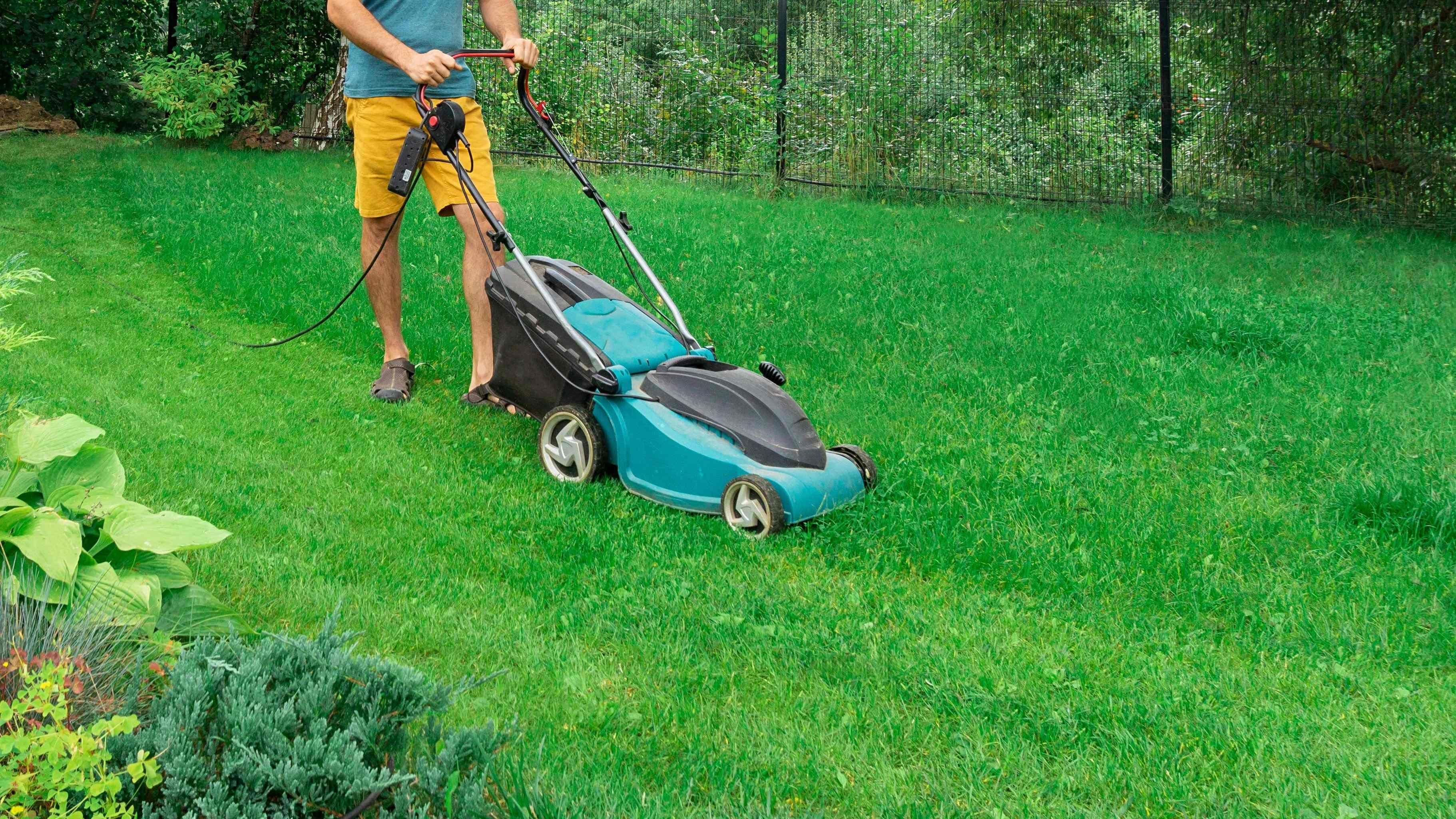 Comment entretenir la pelouse