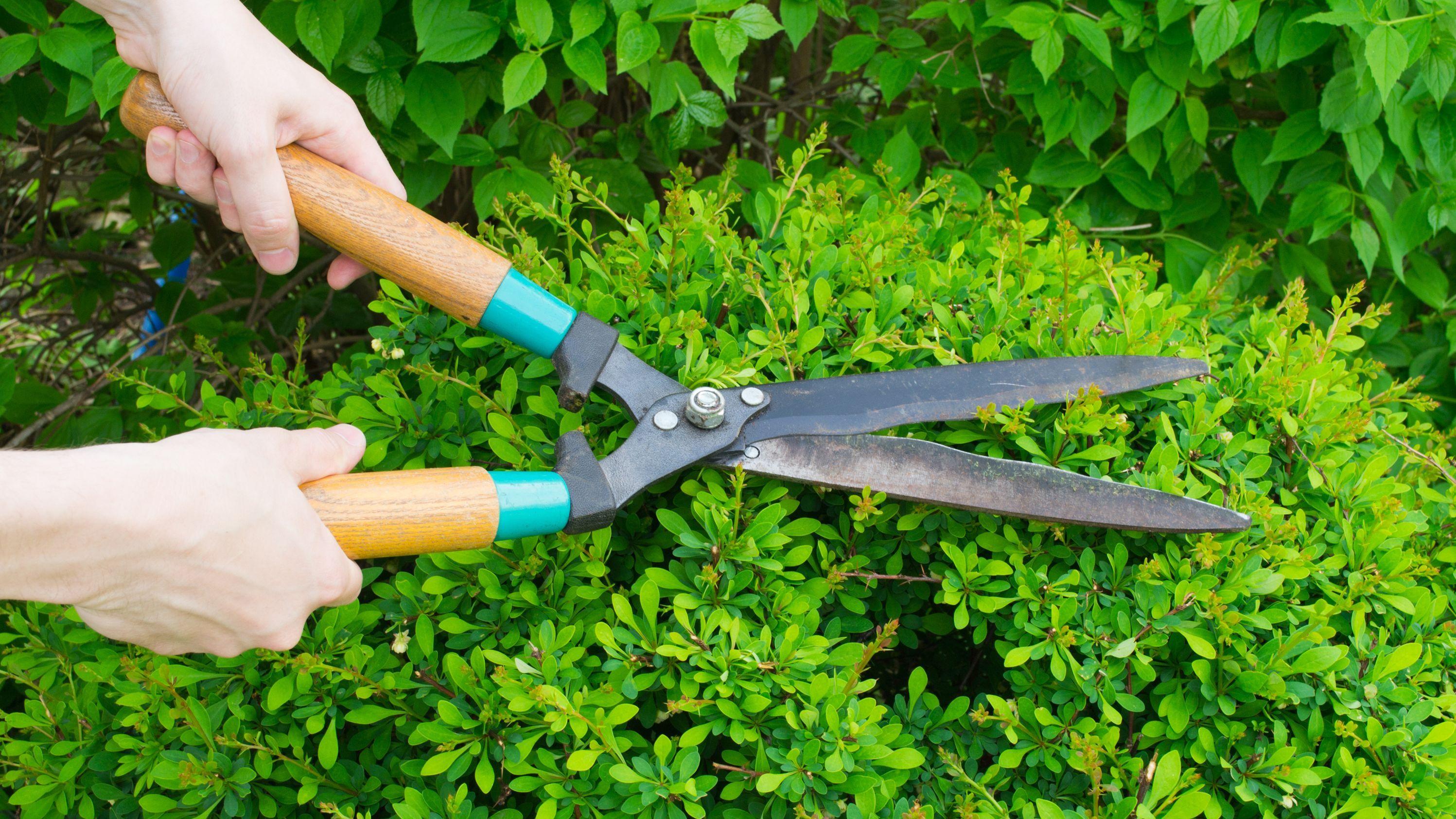 Quels outils pour tailler une haie