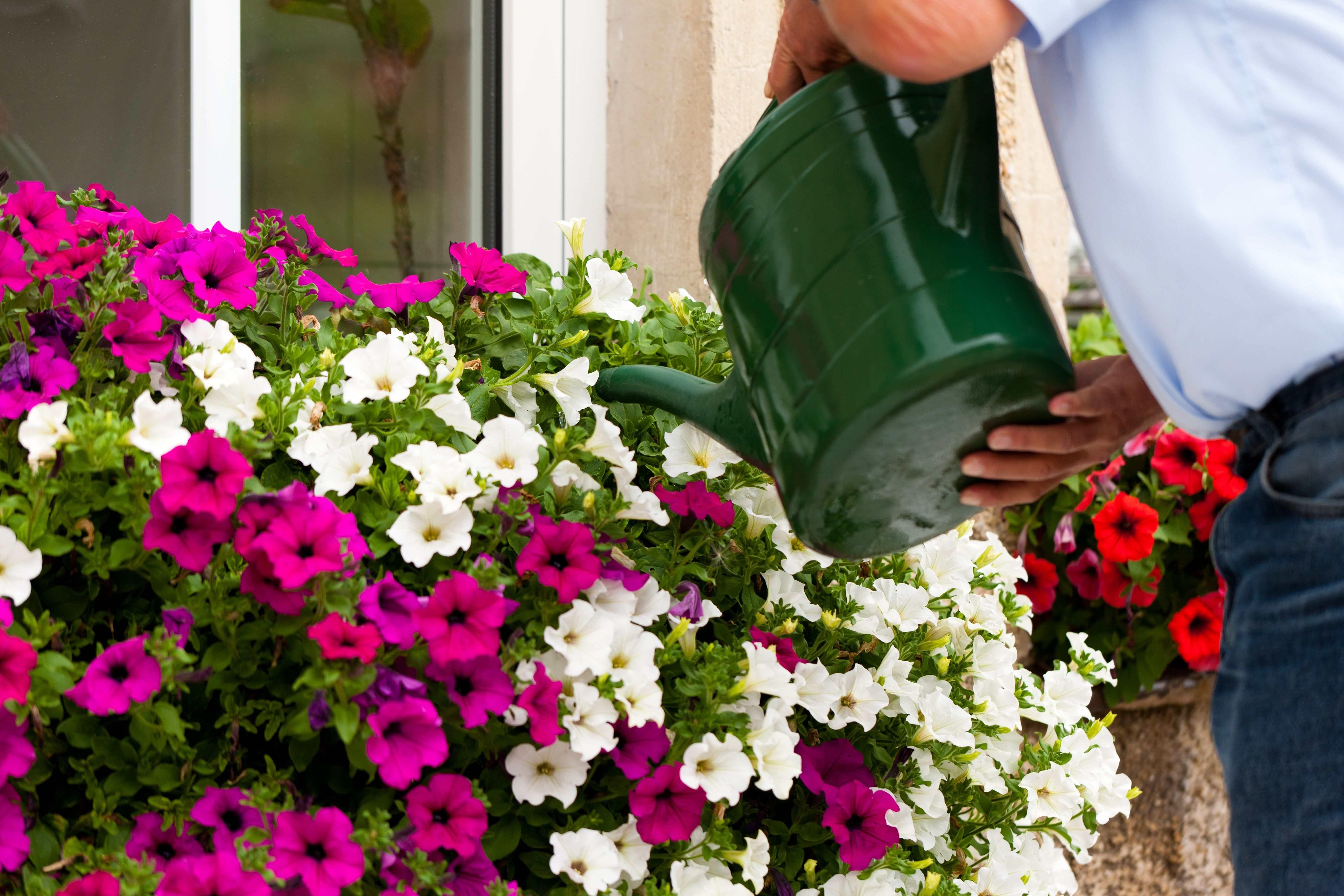 Quelles sont les plantes méditerranéennes pour balcon et terrasse
