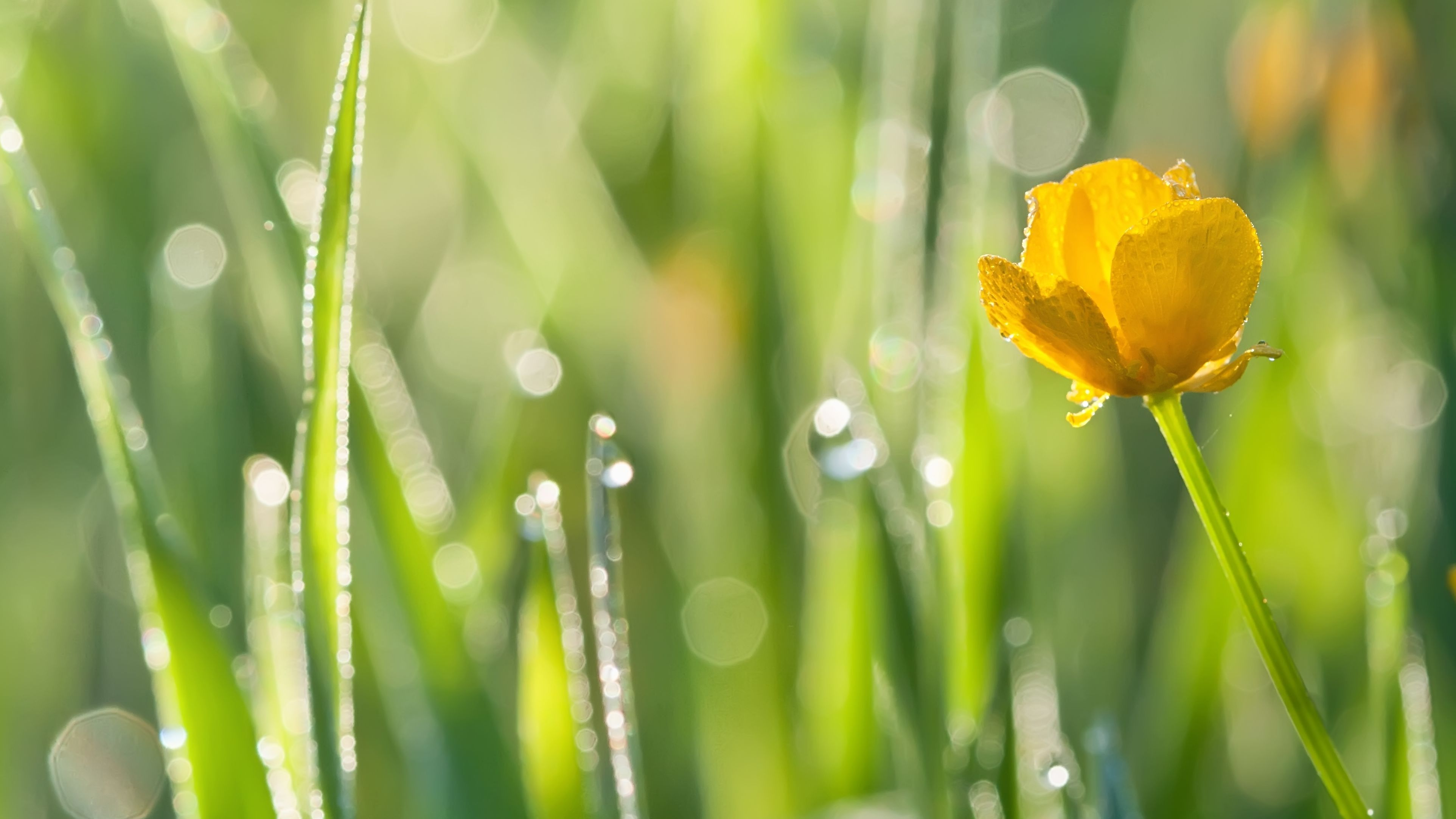 """""""Petite pluie d'avril fait belle moisson d'été."""""""