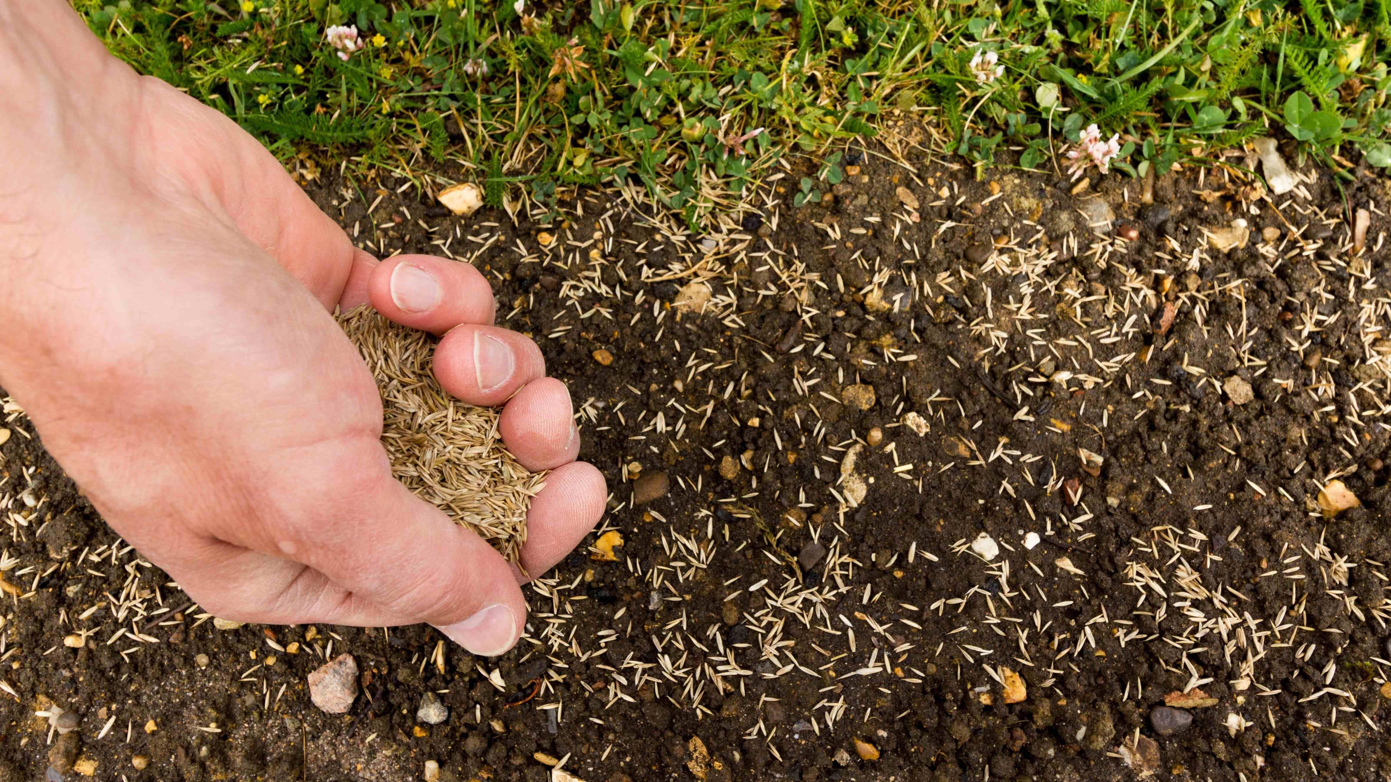 Comment semer le gazon