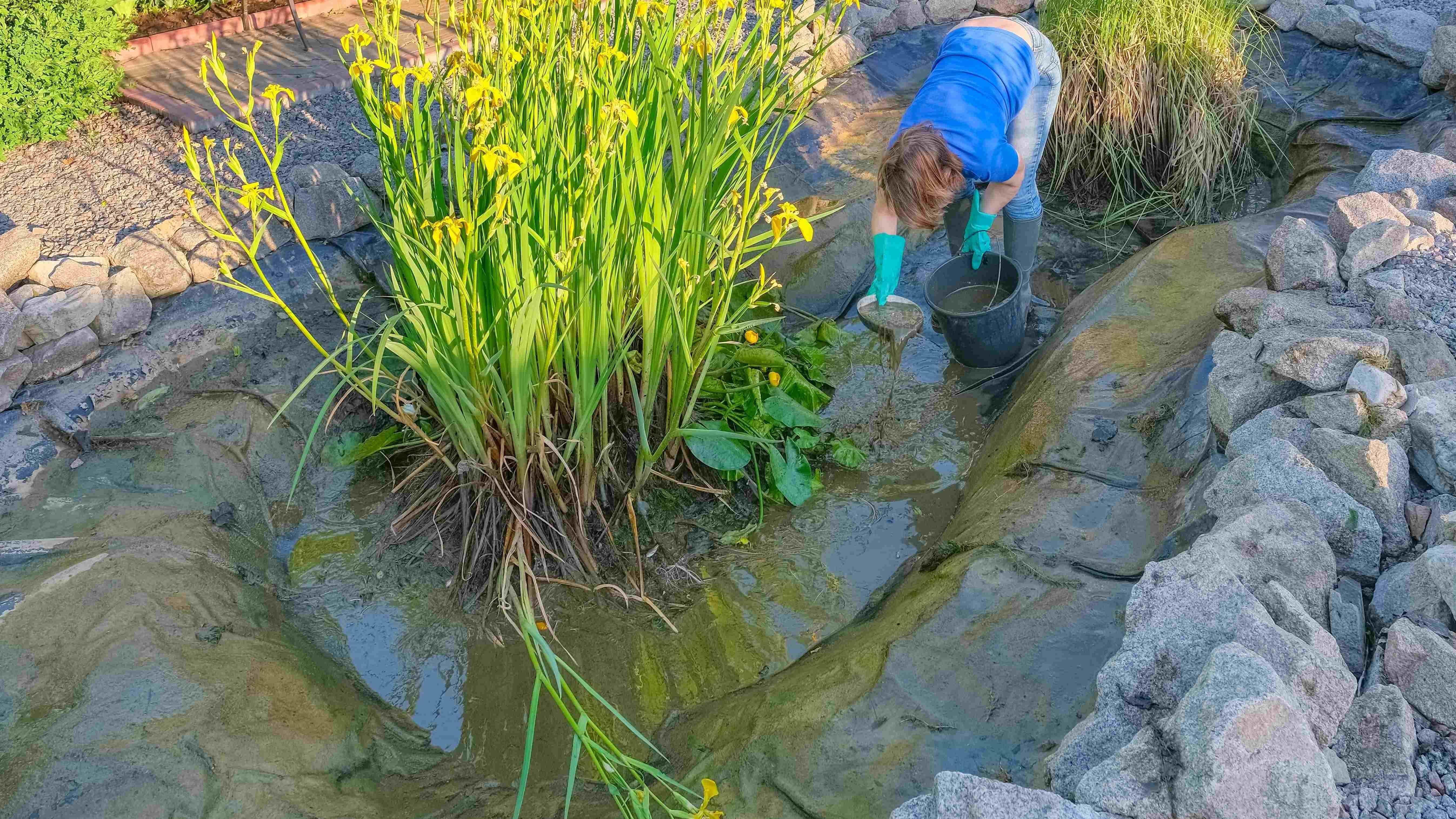 Entretien d'un bassin de jardin : les réflexes à adopter