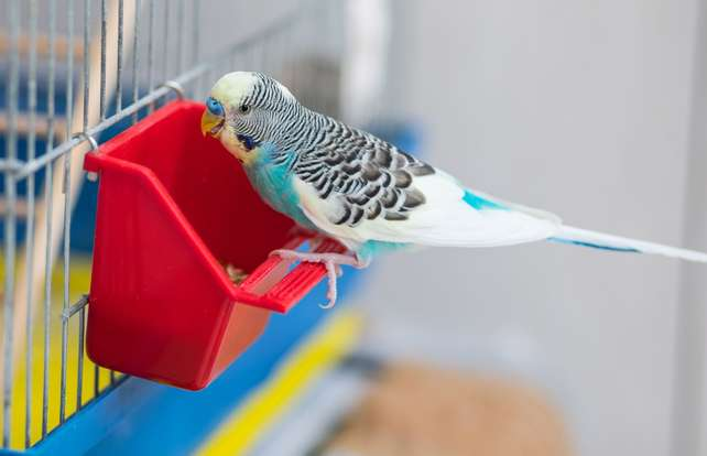 Bird cage accessories buying guide