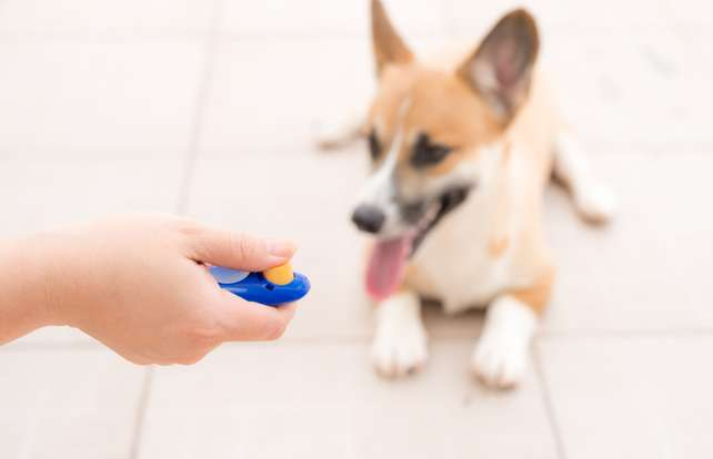 Dog whistle and clicker buying guide