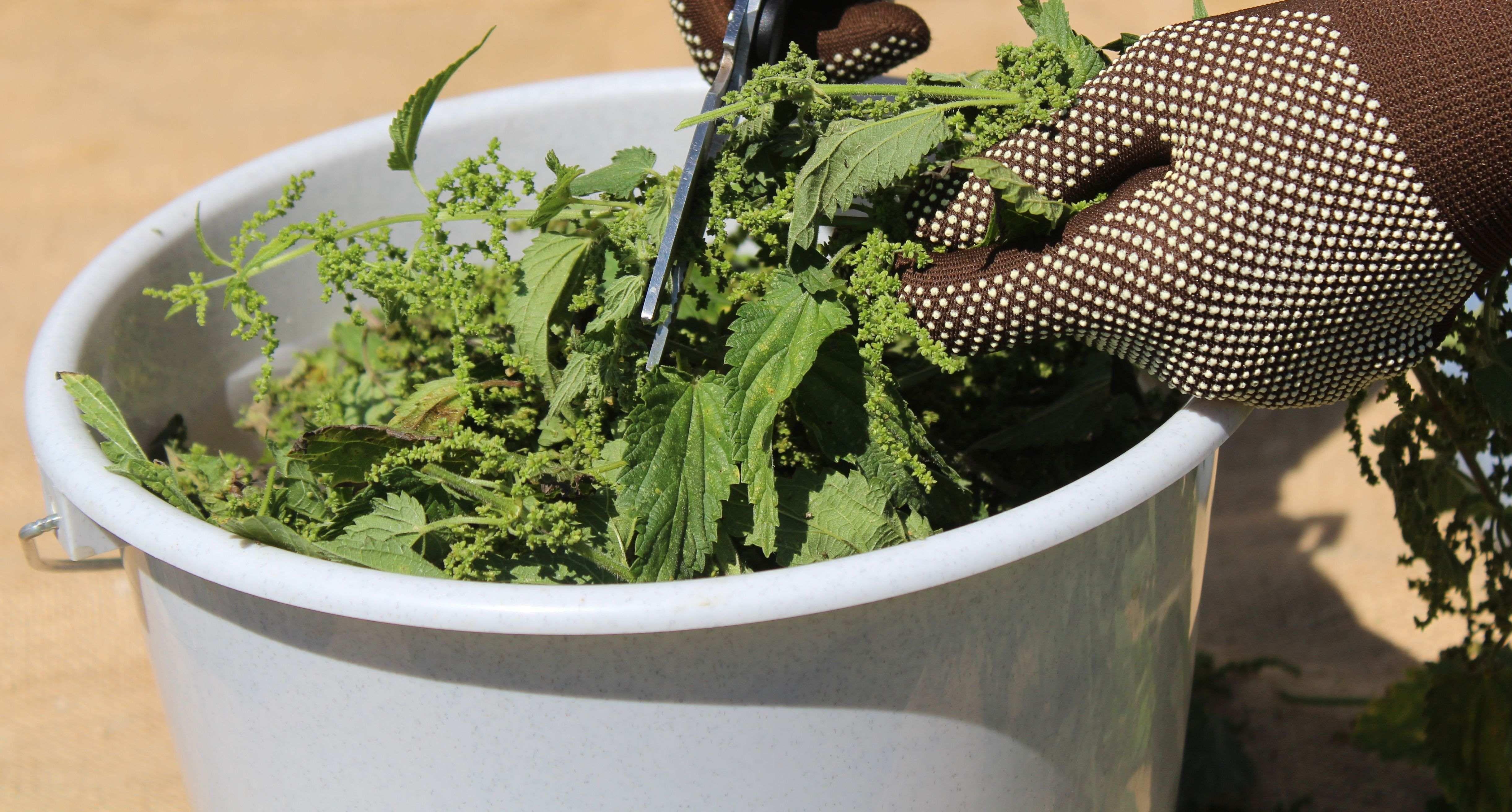 How to make liquid fertilisers at home