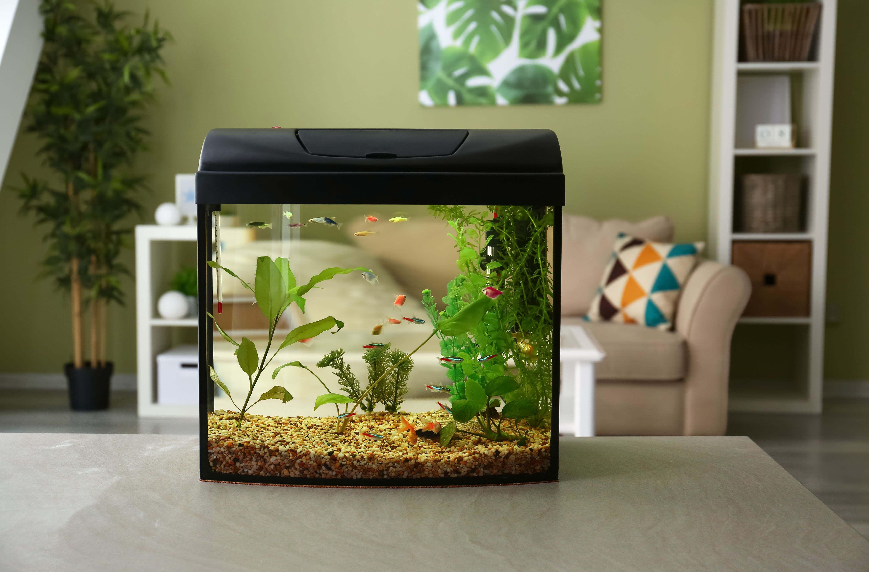 Small aquarium buying guide