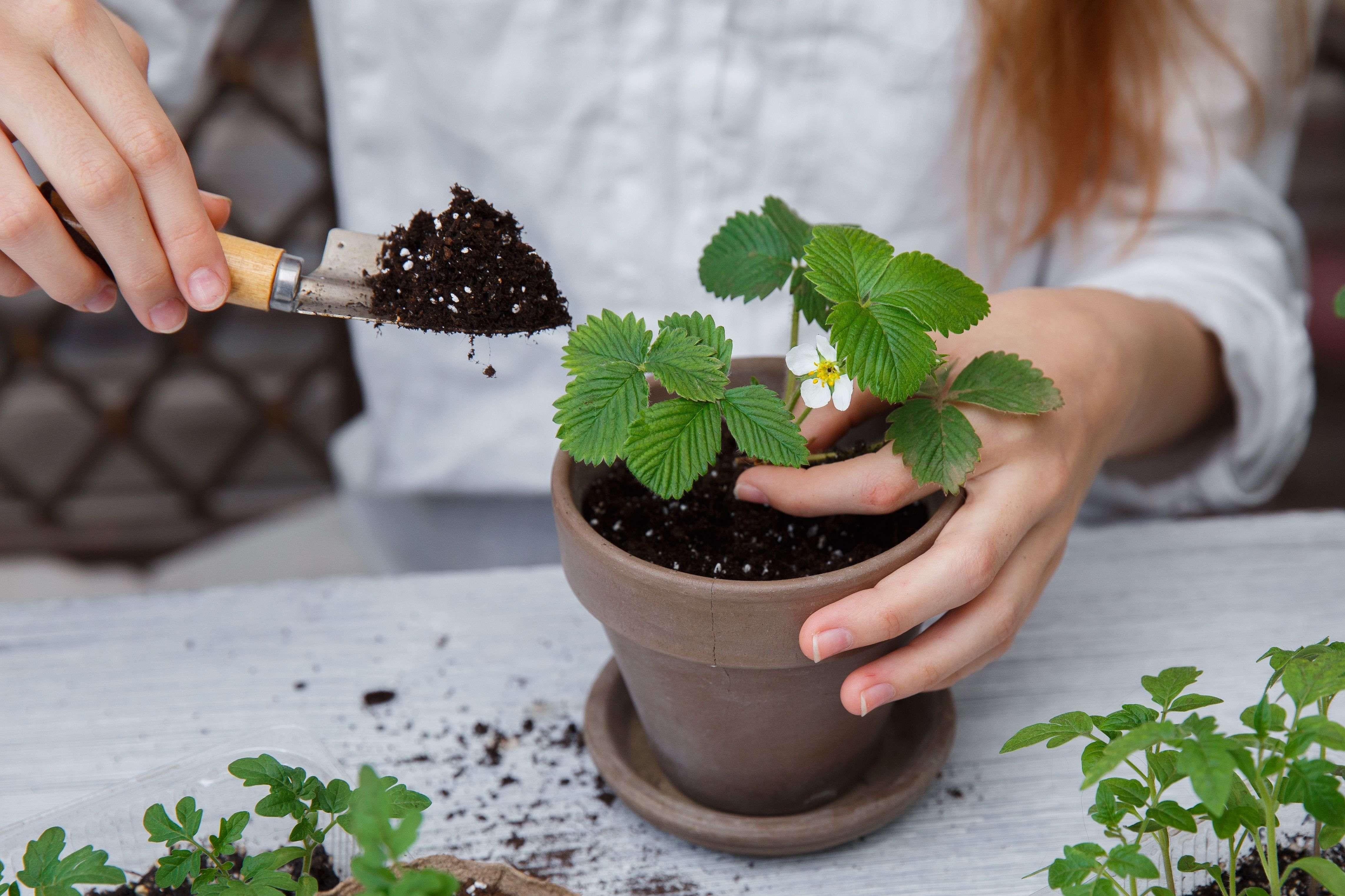 Come rinvasare una pianta