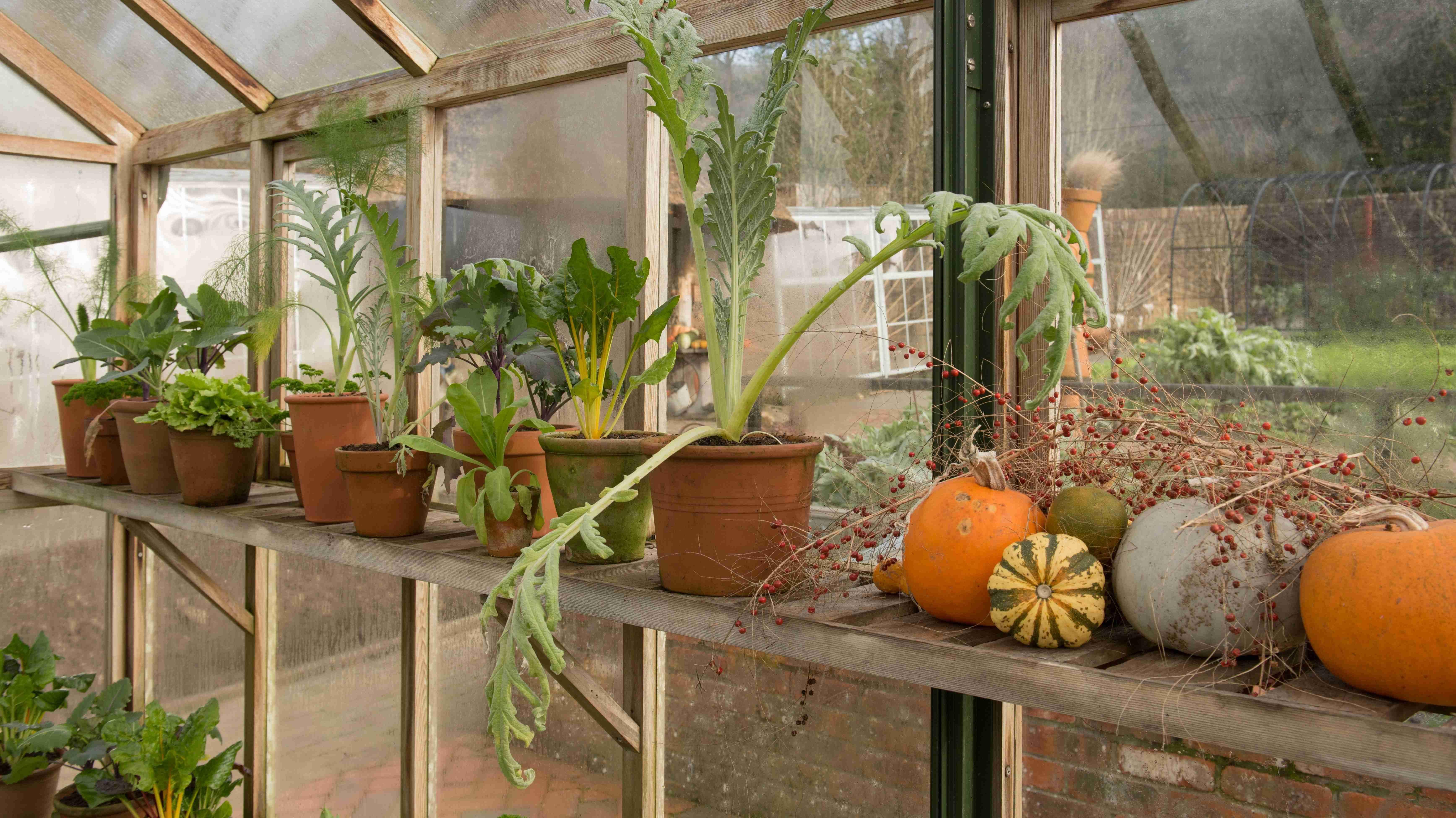 Hivernage des plantes en serre