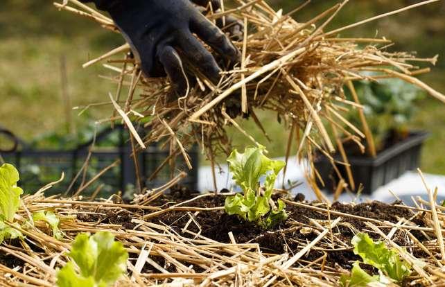So finden Sie die richtige Abdeckung für Ihre Pflanzen
