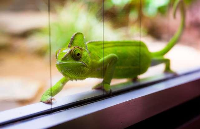 Comment choisir  son terrarium pour reptiles