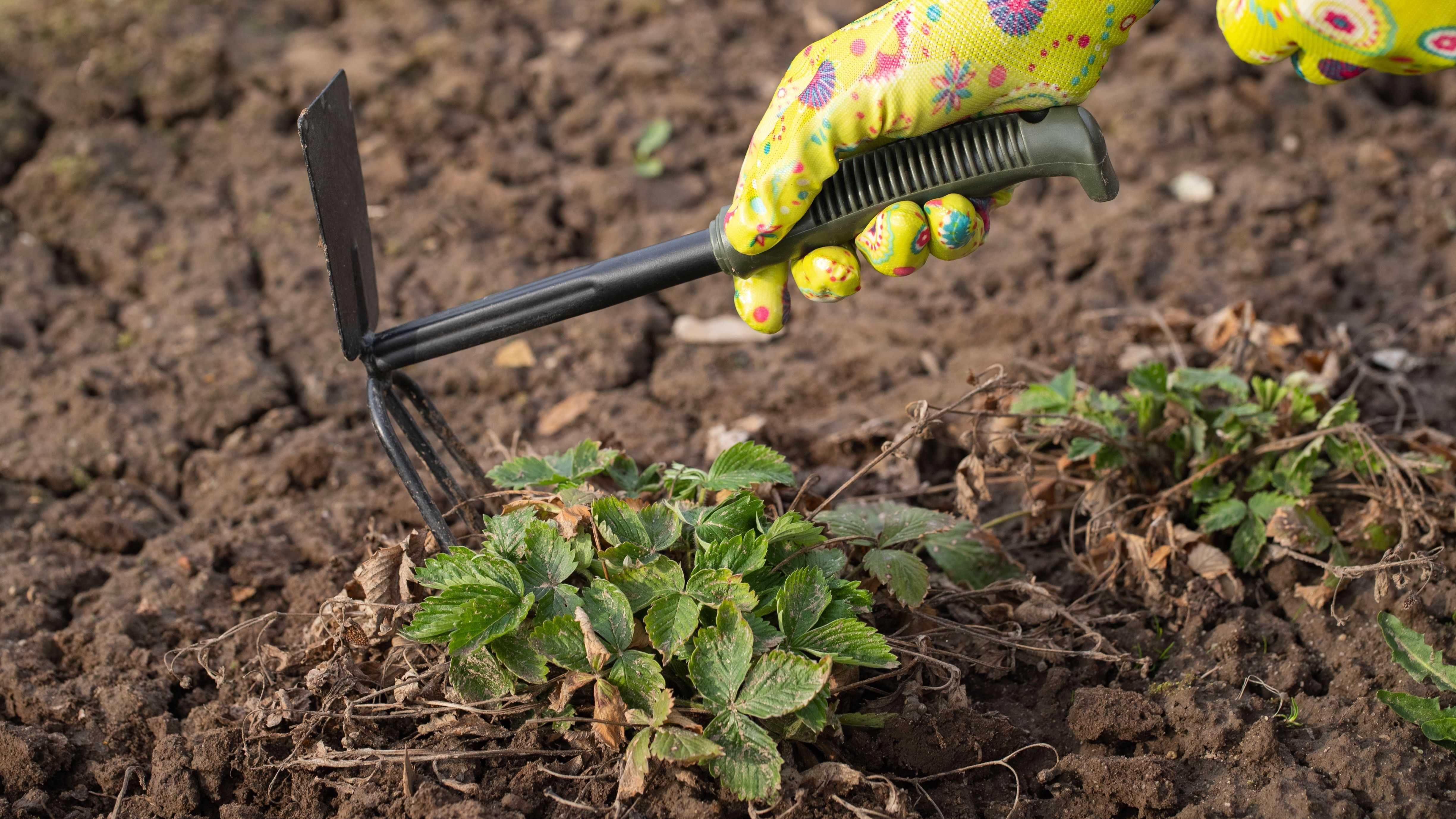 Giardino: utensili e attrezzature per iniziare