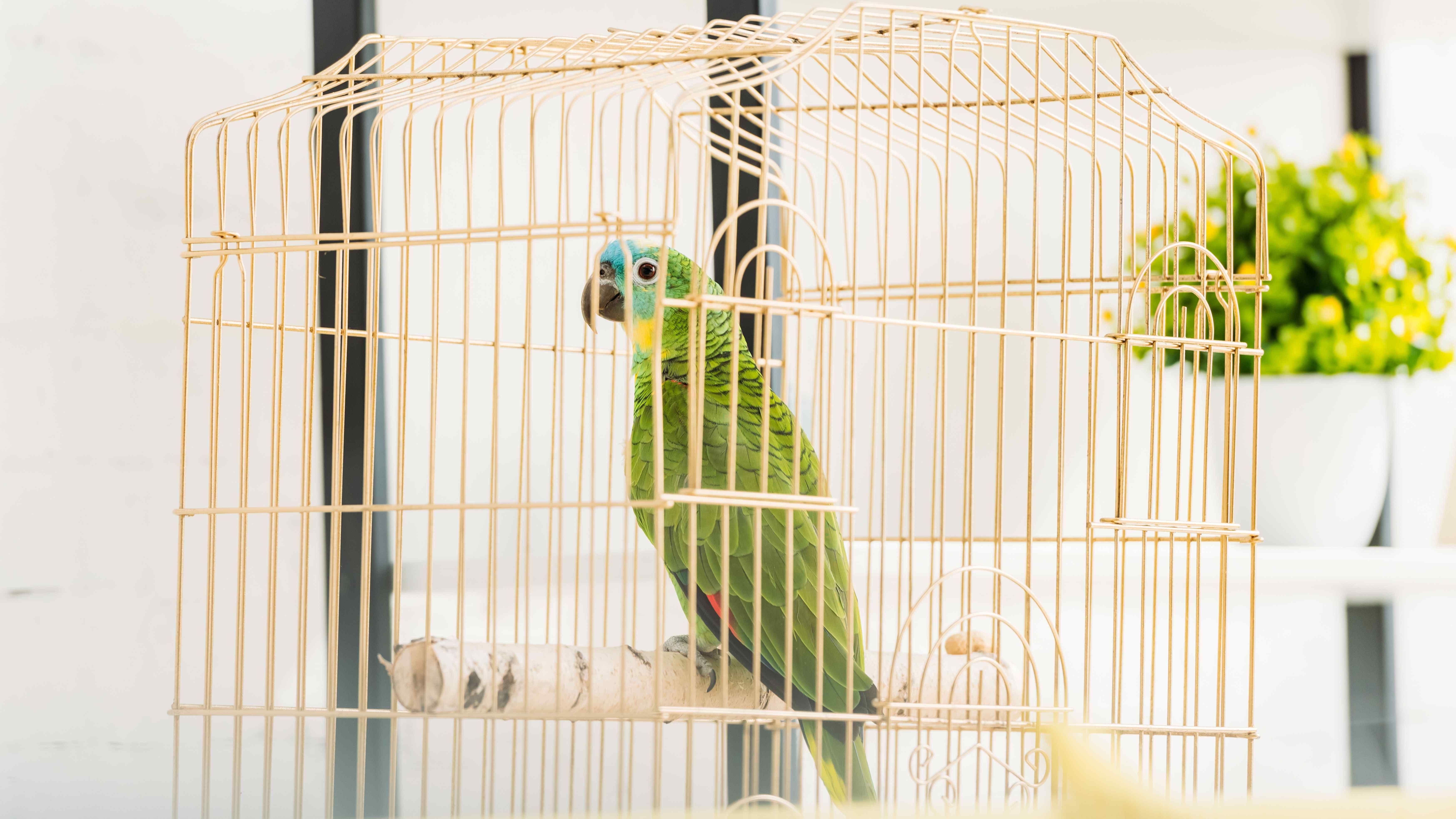 Cage pour oiseaux :  comment choisir