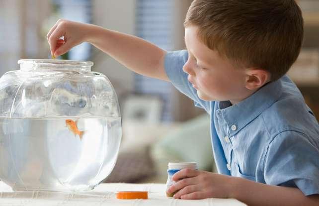 ¿Cómo elegir los alimentos para peces?