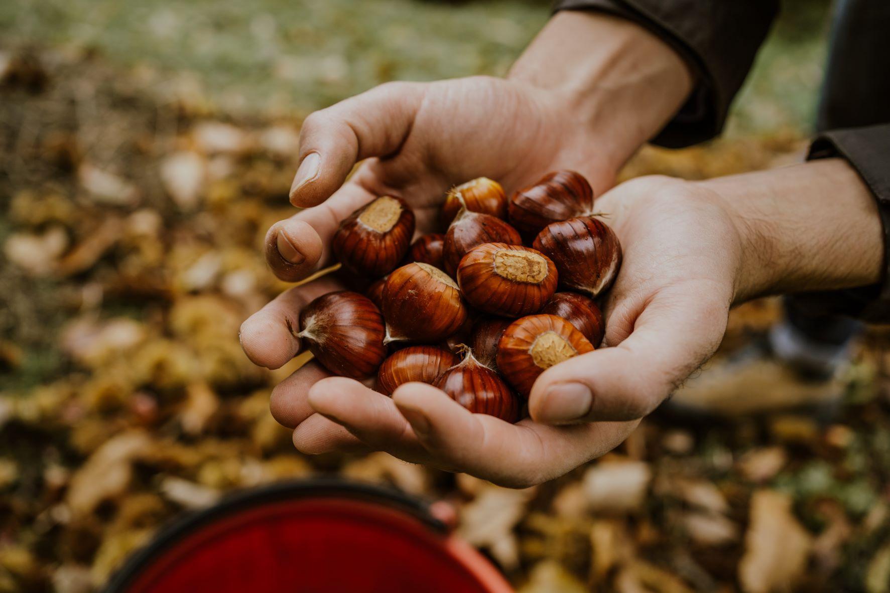 Ottobre: cosa fare in casa e in giardino