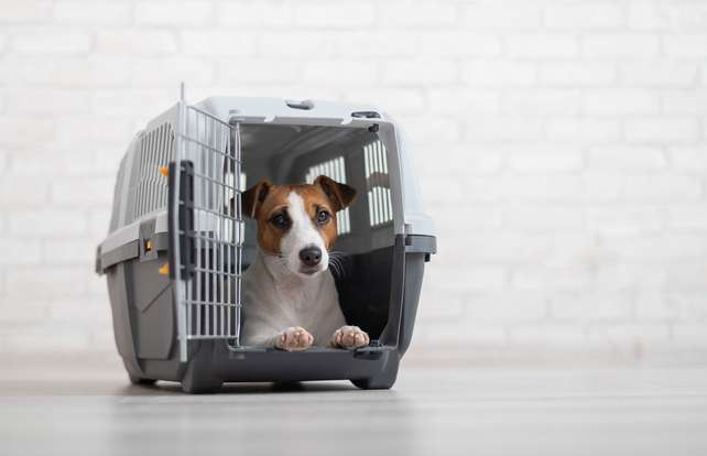 Dog travel crate and carrier buying guide