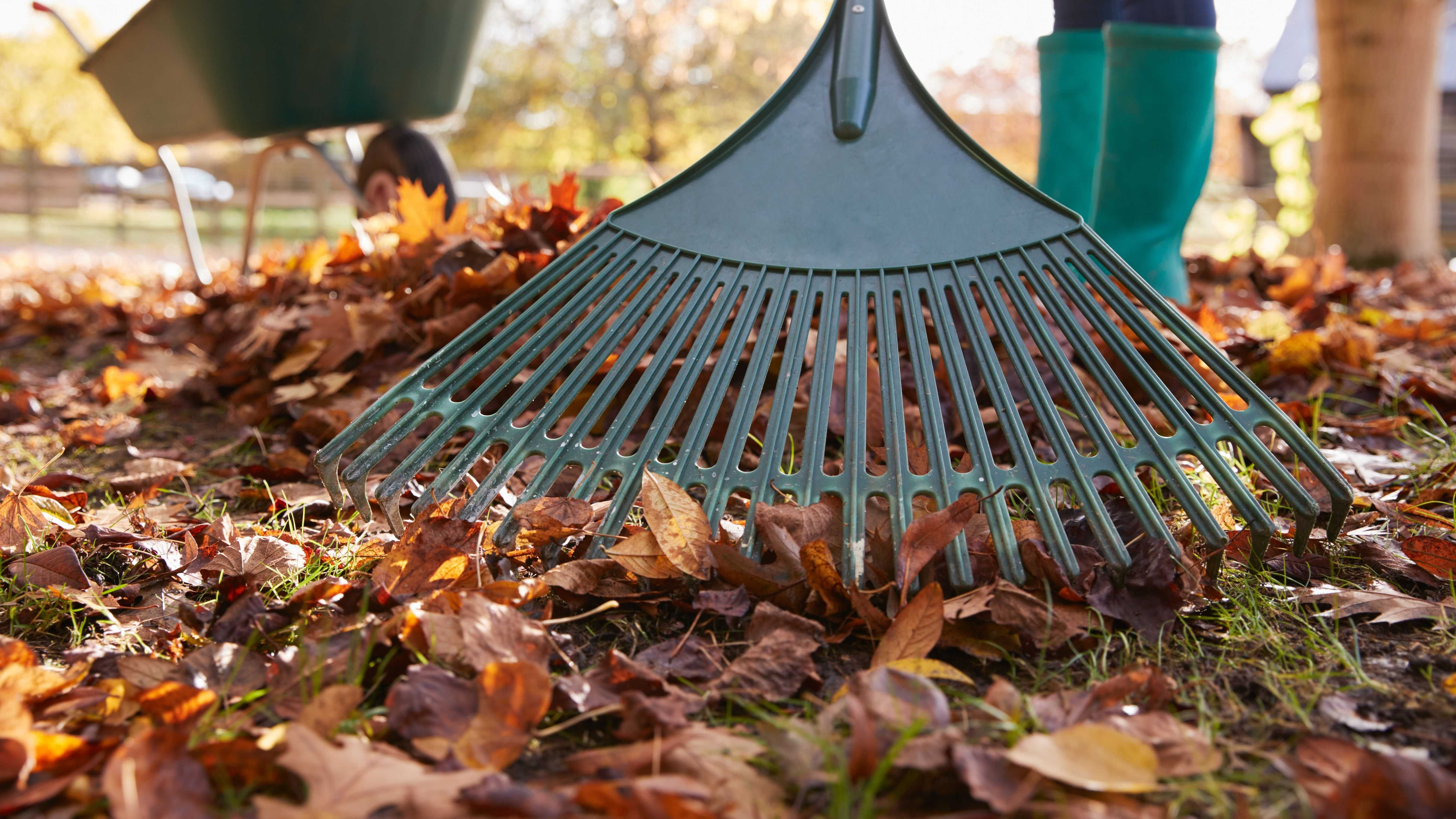 La manutenzione del giardino in autunno