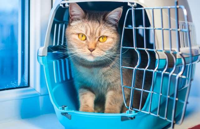 Comment choisir  une caisse et un sac de transport pour chat