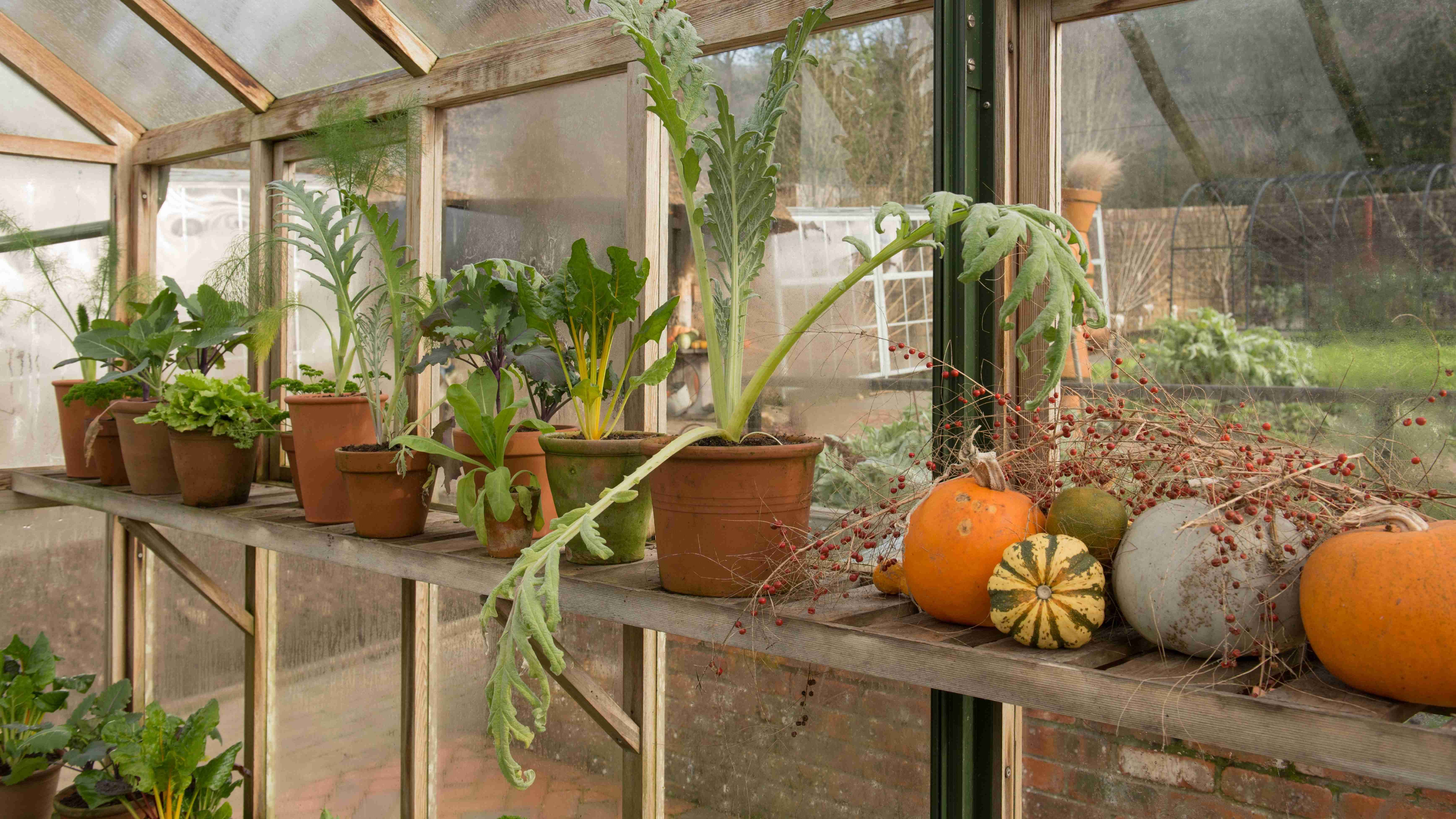 How to overwinter your plants