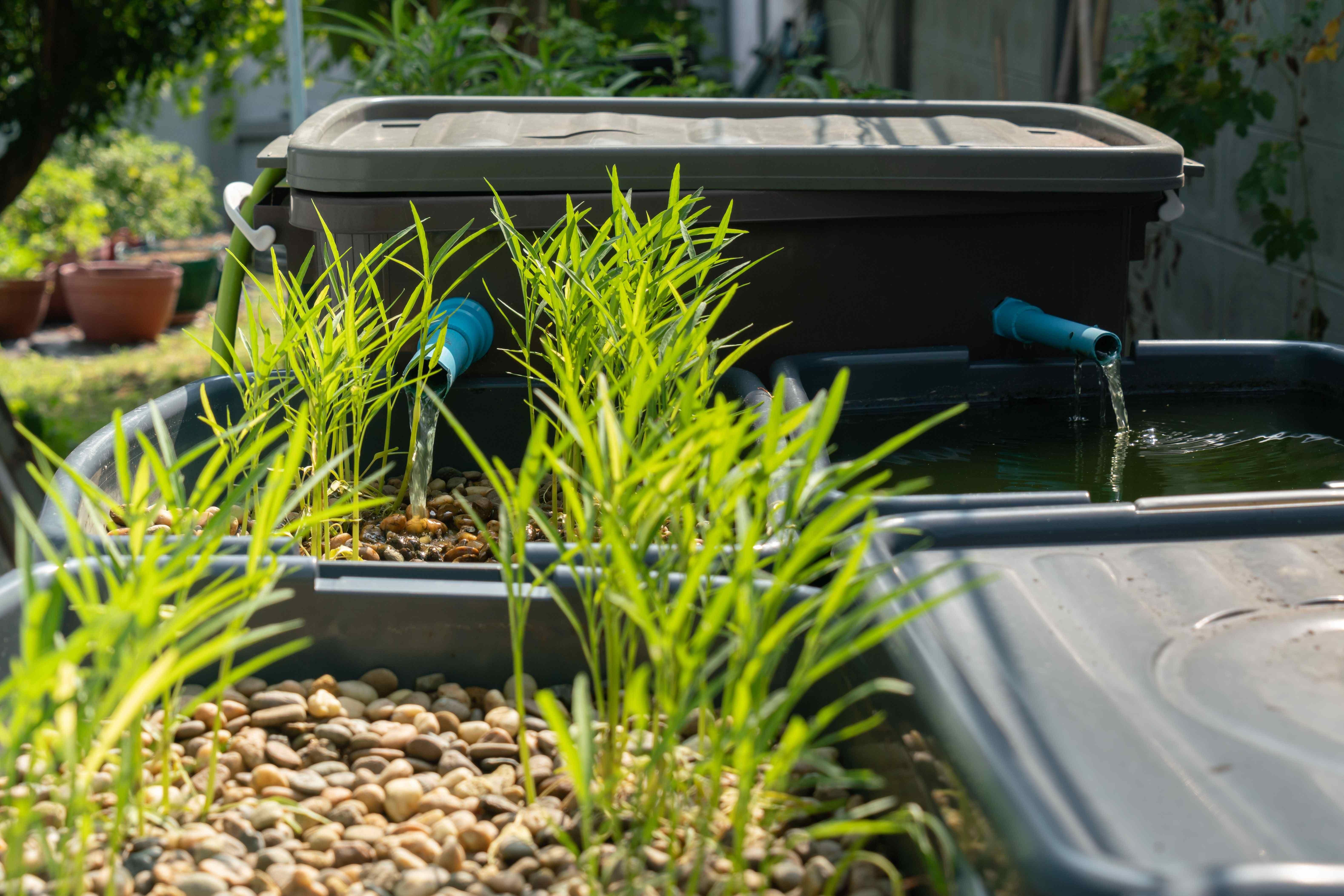 Acquaponica: tutte le informazioni necessarie per avviare la coltivazione