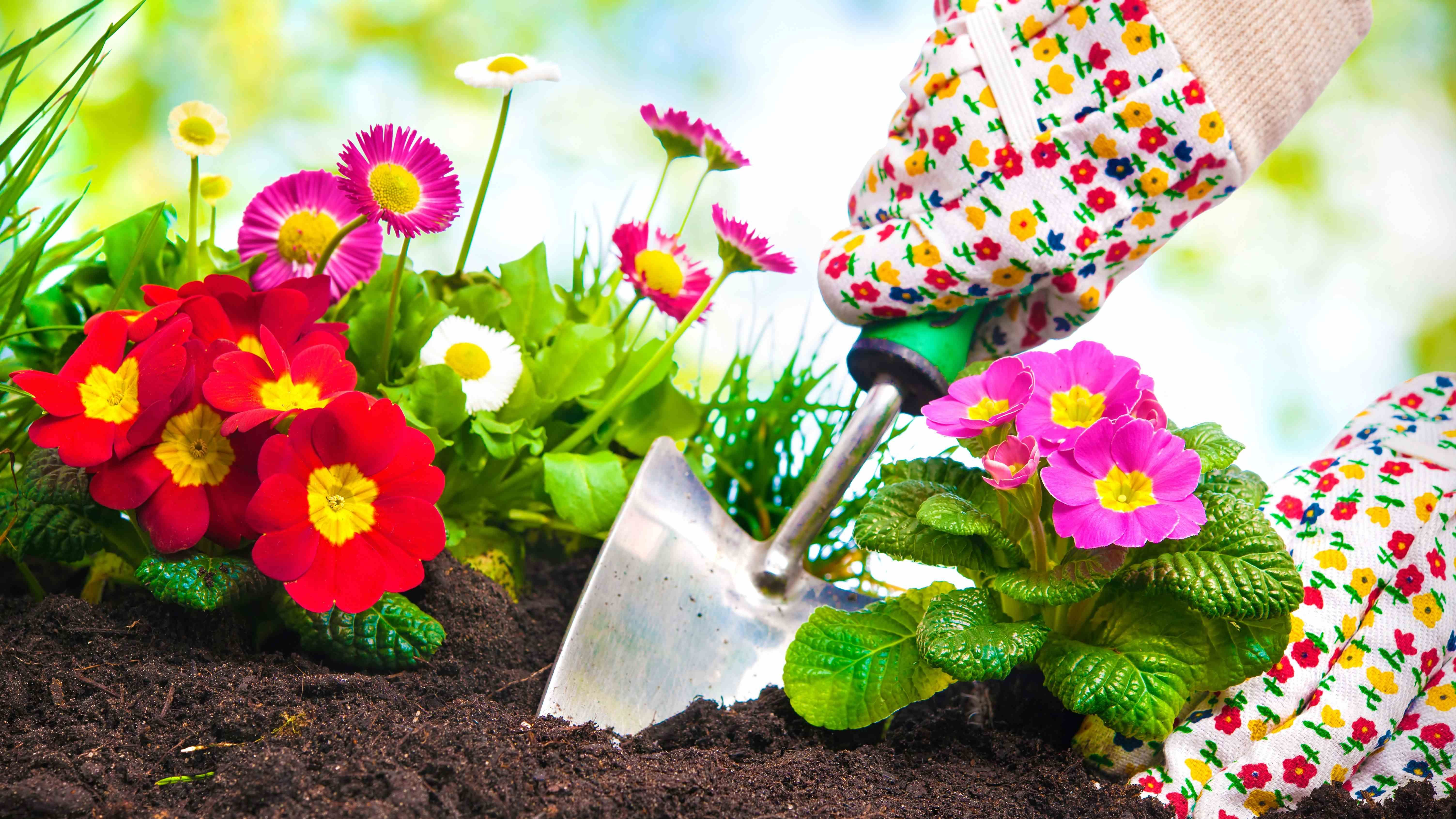 Flowers to plant and sow in March