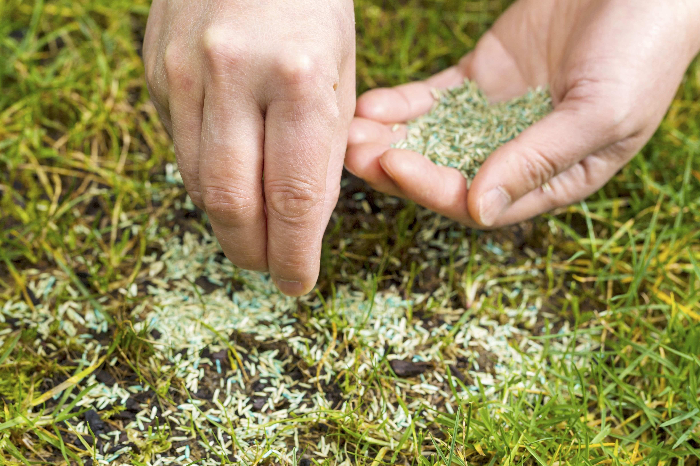Come rigenerare un tappeto erboso