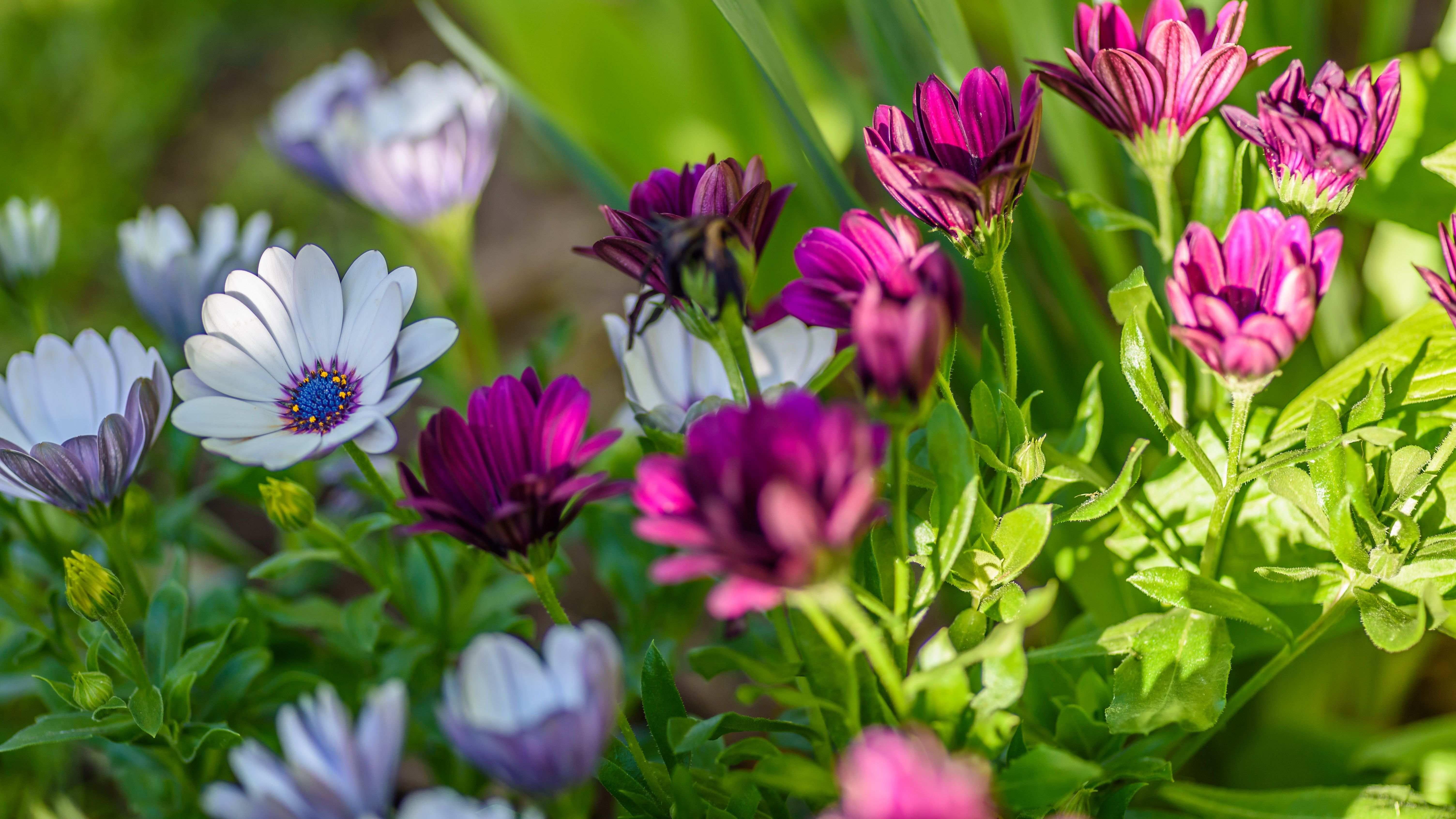 Les 23 plantes vivaces les plus communes