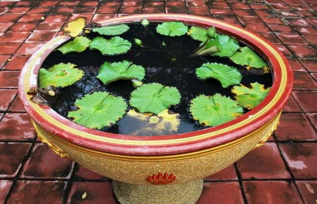 Cómo decorar un estanque de jardín