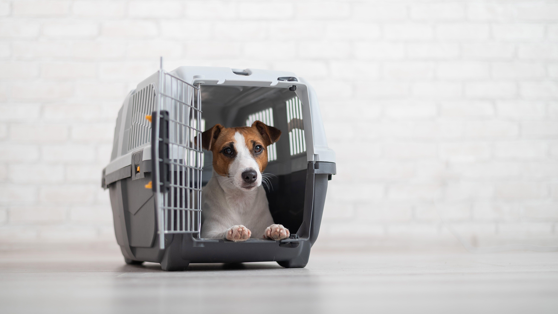 Comment choisir  une caisse ou cage de transport pour chien ?
