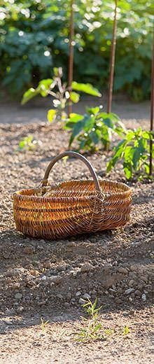 Come proteggere le piante