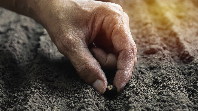 Come preparare l'orto in primavera