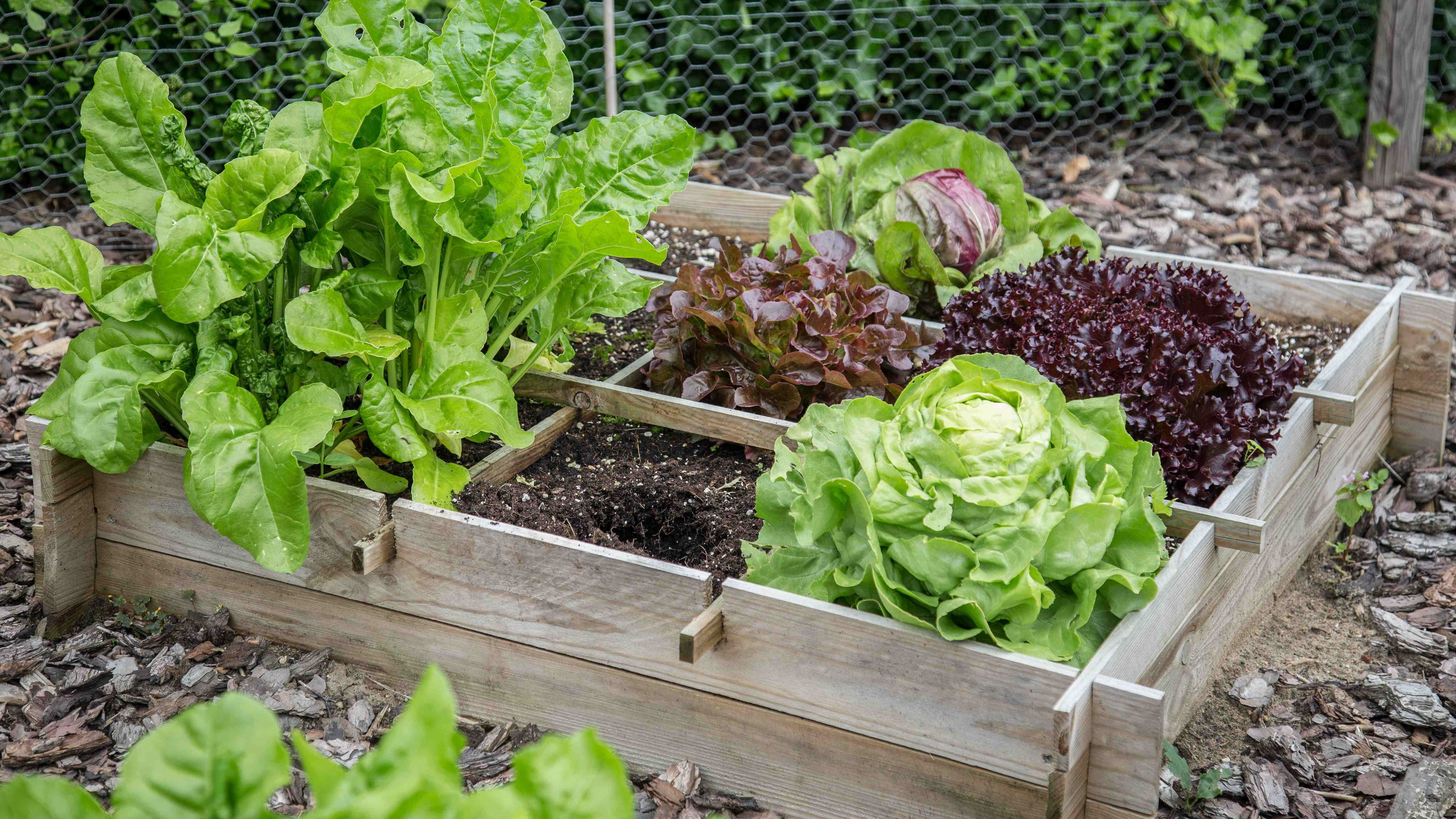How to set up a raised garden bed