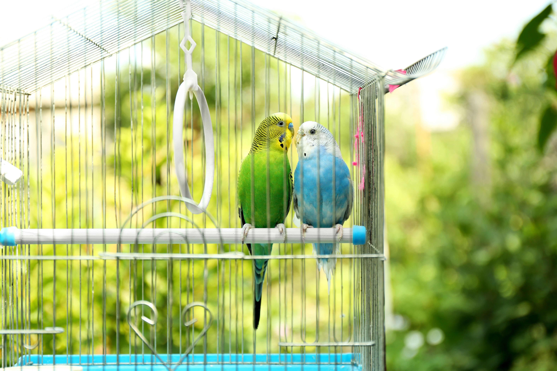 Aviary buying guide