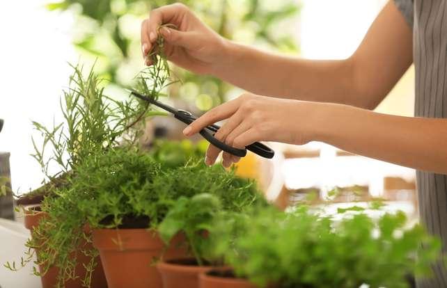 Comment choisir et cuisiner des plantes aromatiques ?
