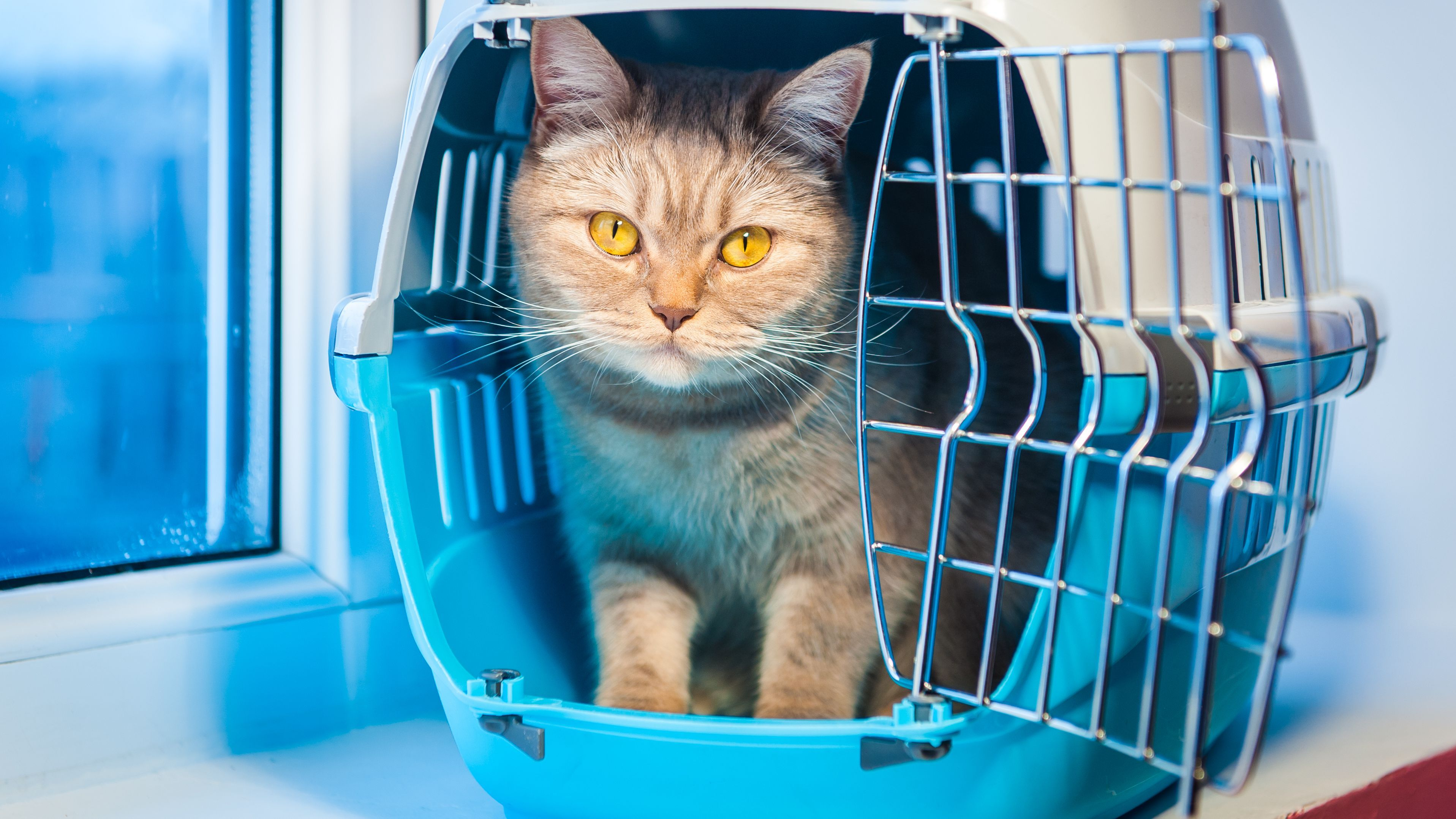 Cat travel carrier buying guide