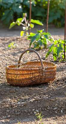Polytunnel buying guide