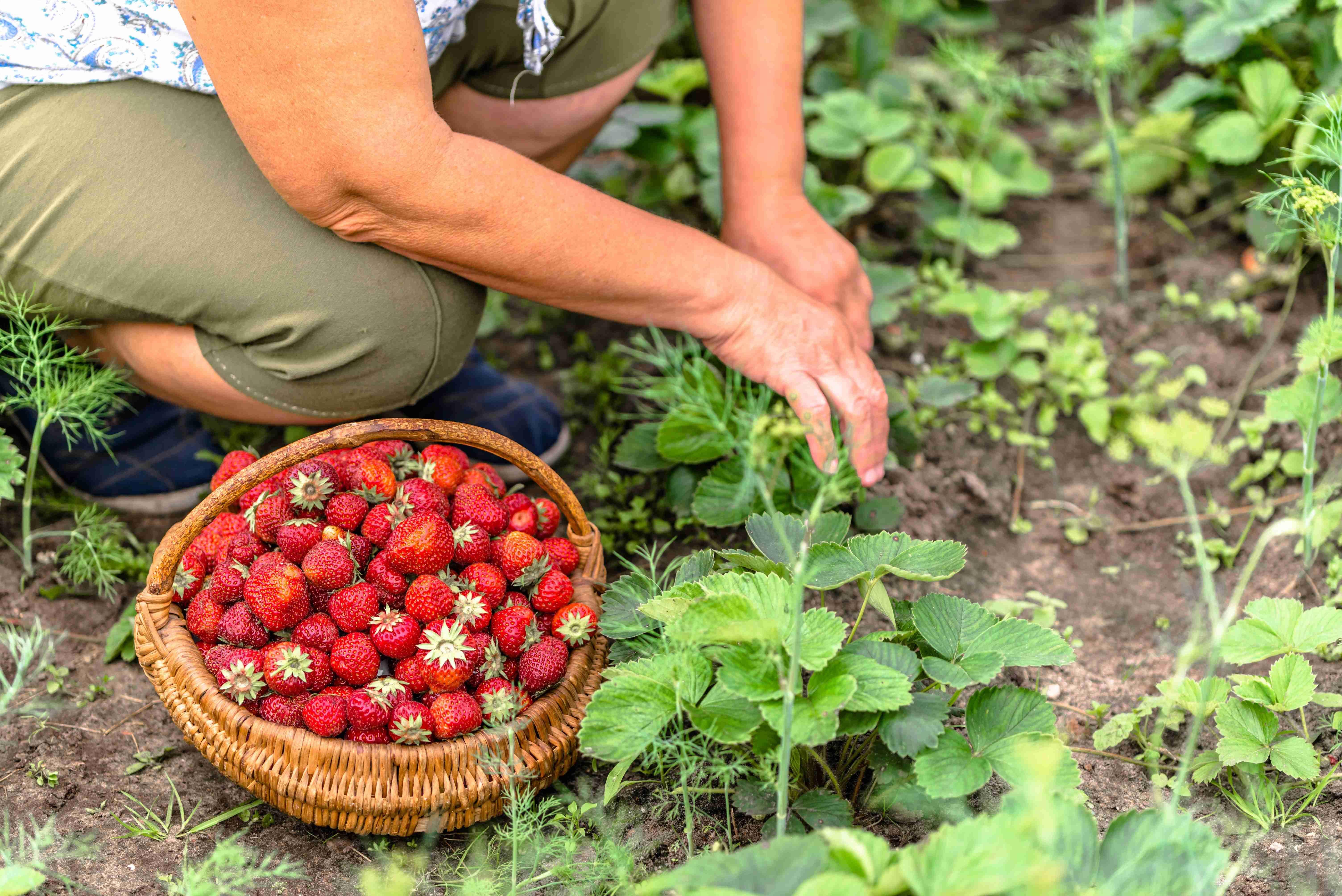 Come coltivare un giardino biologico