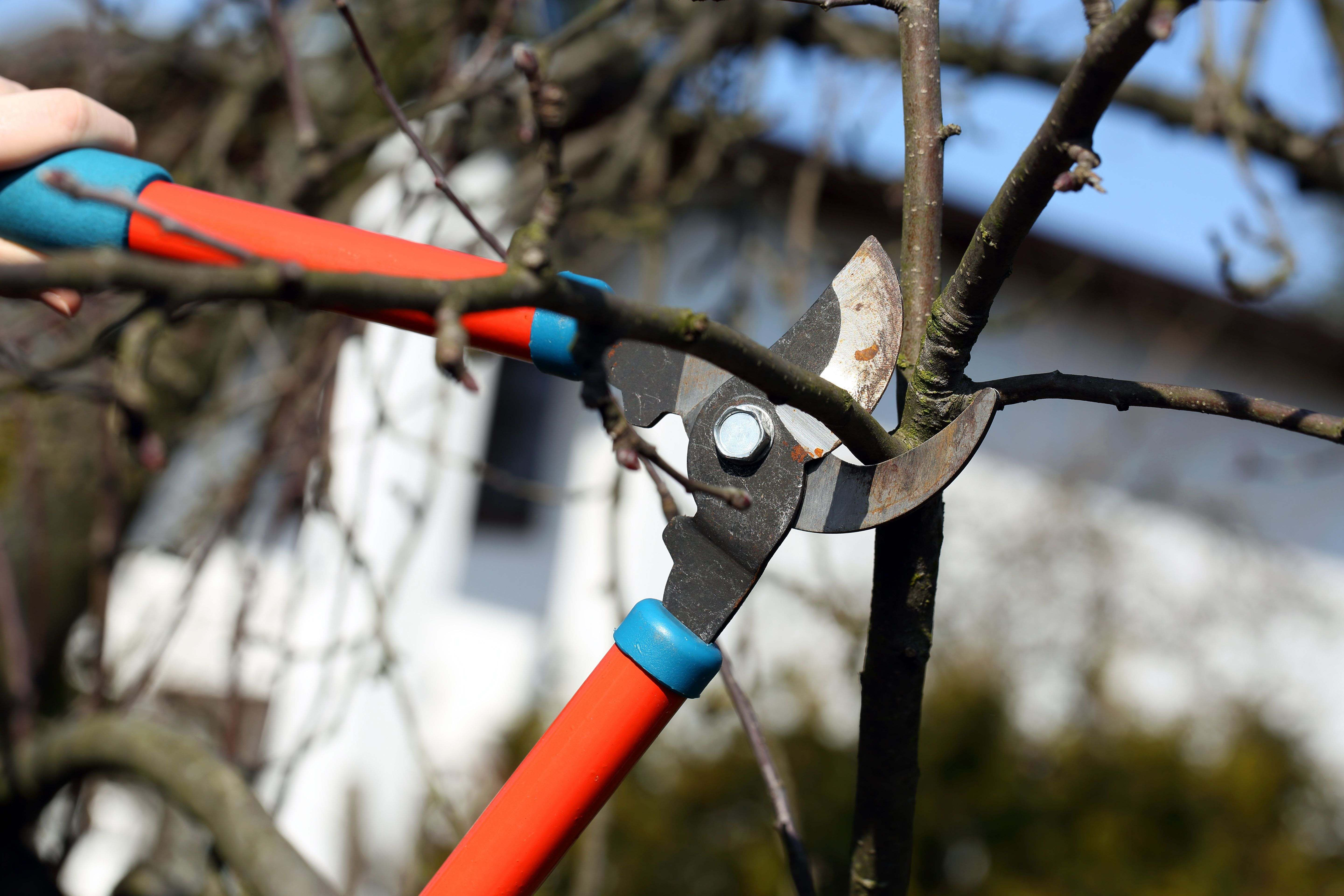Comment choisir son coupe-branches
