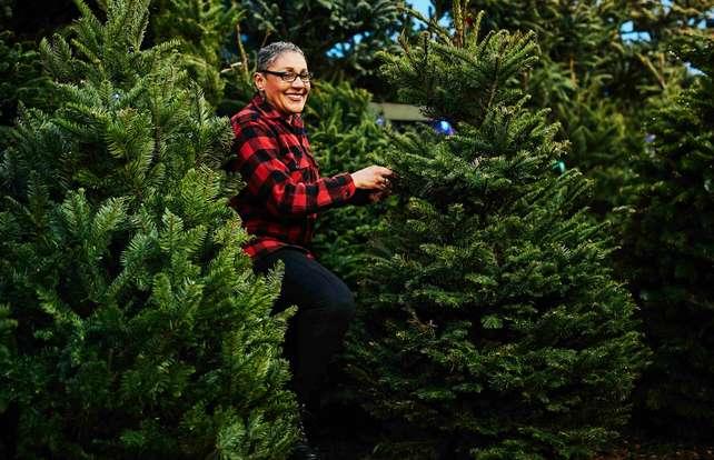 So finden Sie den richtigen Weihnachtsbaum