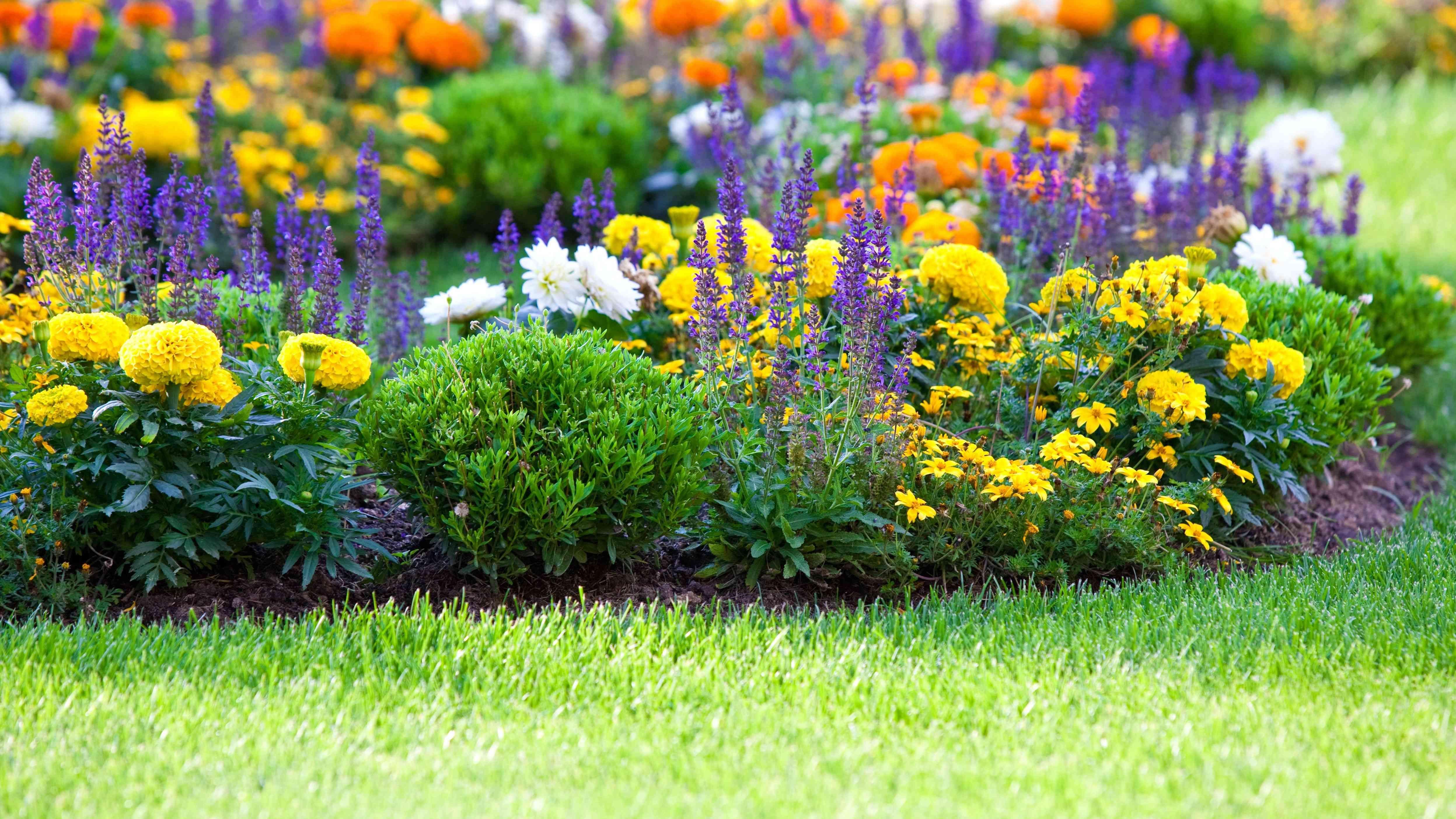 Bien planter  un massif de fleurs