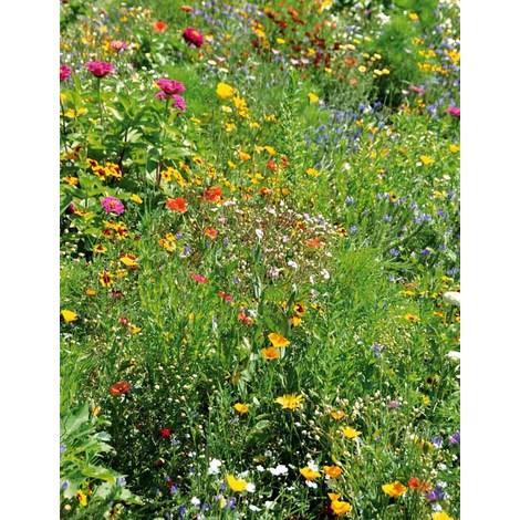 Por qué sembrar una mezcla floral