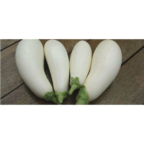 Melanzana bianca innestata (vaso 14)