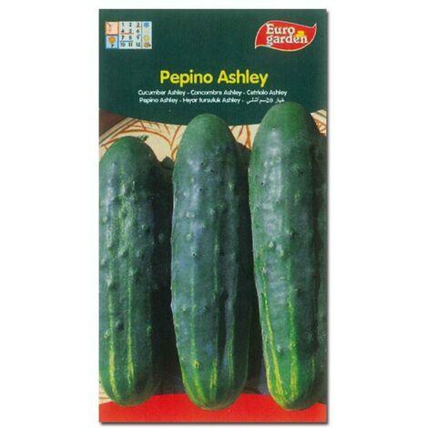 MIBRICOTIENDA semillas fito horticolas pepino ashley 00234 (caja 10 unidades)