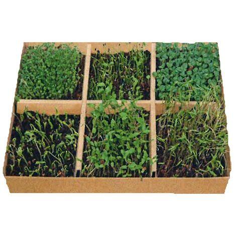 Mini serre à semis 6 legumes plantes mediterranée - Astuceo