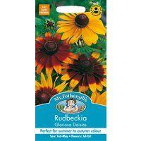 Mr Fothergills - Pictorial Packet - Flower - Rudbeckia Gloriosa Daisies - 500 Seeds