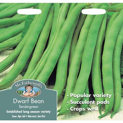 Dwarf French Bean Kings Seeds Pictorial Packet Tendergreen Vegetable